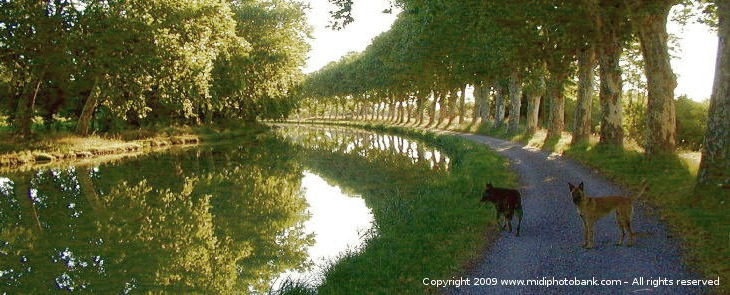 Midi Canal morning walk with the dogs
