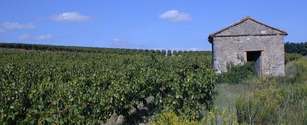 The vineyards that surround Rustiques